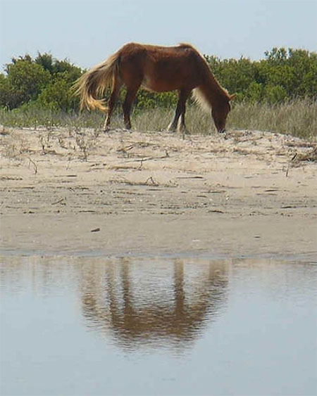 Deborah H. Doolittle: On the Shackleford Banks